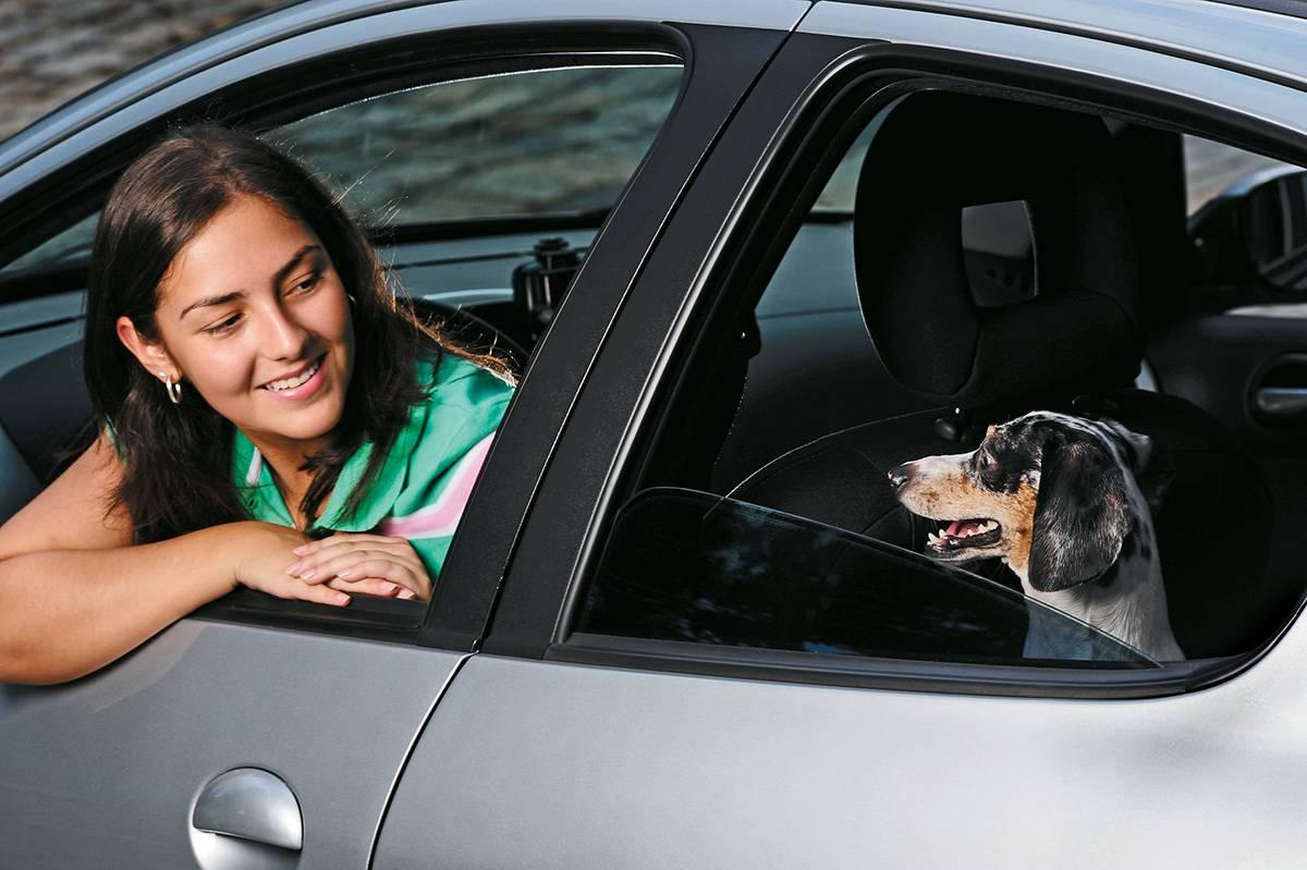 como transportar seu pet no carro e evitar multa de até R$ 196