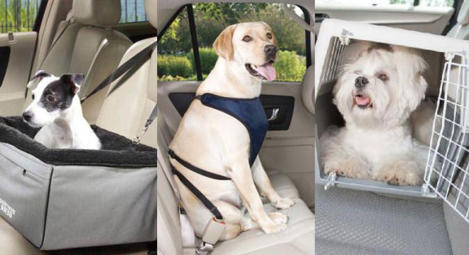 Saiba como transportar seu pet no carro e evitar multa
