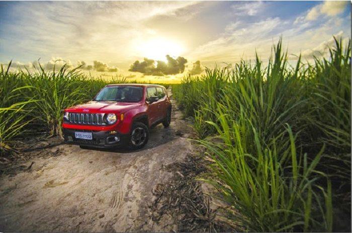 Jeep em meio a plantações