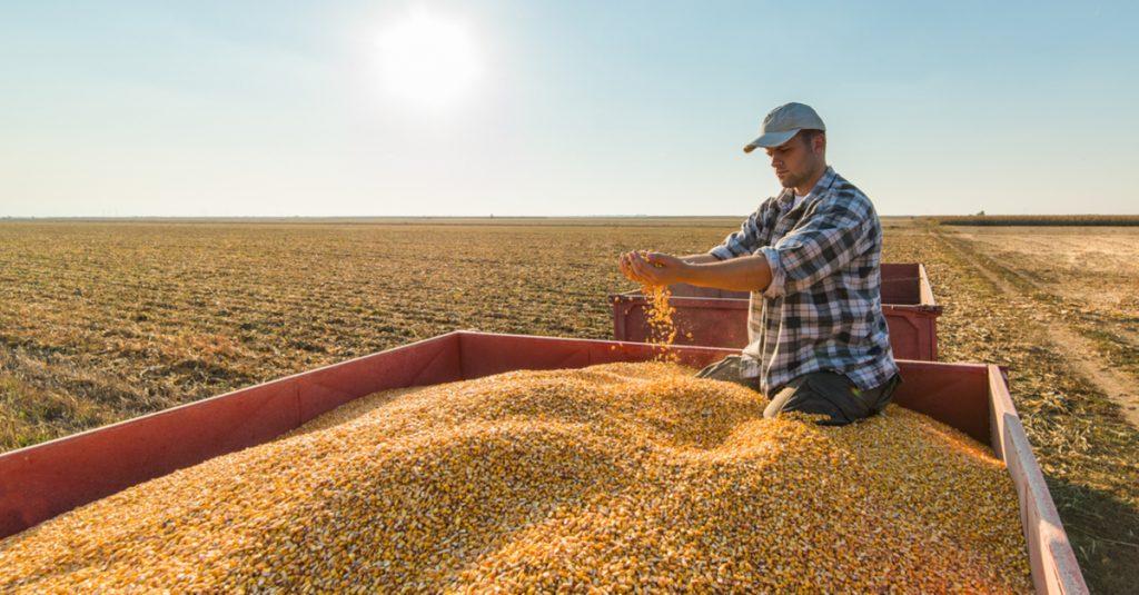 Fiat; produtores rurais podem pagar carros com grãos